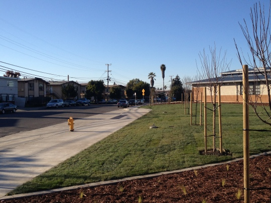 27000 tyrrell school - new landscaping